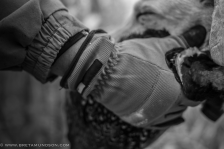 111716-r-r-pheasants-justin-close-up-grabbing-pheasant
