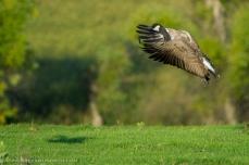9416-goose-landing-ba
