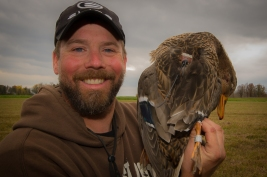 """This hen mallard was banded and fitted with a """"backpack"""" that tracked it's movements via gps."""