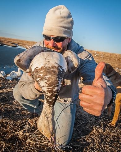 Blue goose from Nebraska