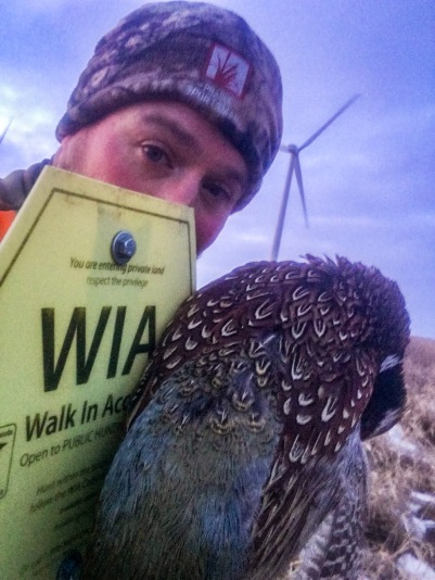 Bret found this rooster near a wind tower on a Walk-In Access piece in southwestern Minnesota.