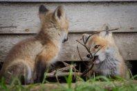 fox kit 3